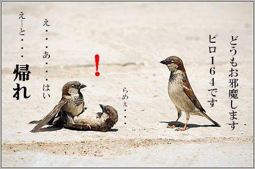 _スズメの三角関係.jpg
